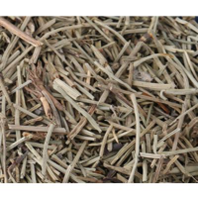 安国卖各种药材露水草
