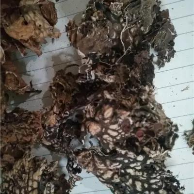 野生中药材老龙皮厂家 出售优质中药材老龙皮 老龙皮价格