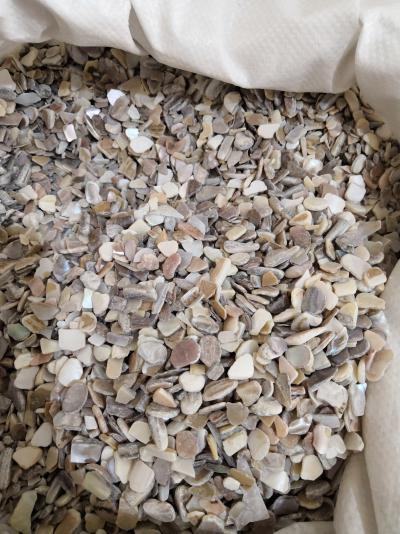 供应珍珠母珍珠母到那里买多少钱一斤