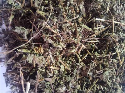 蛇莓批发零售到那里买蛇莓多少钱一斤