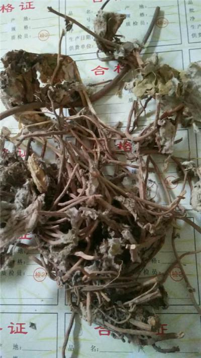 供应肾炎草肾炎草正品哪里能买到正品肾炎草多少钱一斤