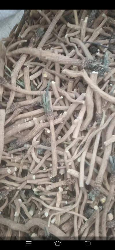出售统货高品质板兰根