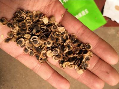 蜀葵籽怎么卖的蜀葵籽一斤多少钱哪里能买到蜀葵籽