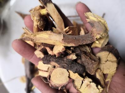 供应酸枣根酸枣根批发零售到那里买酸枣根多少钱一斤