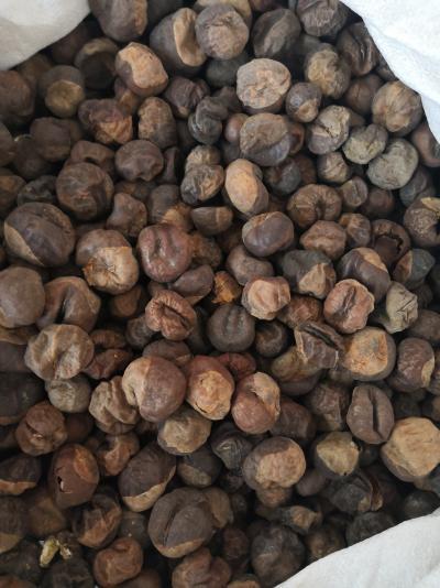 娑罗子产地价格娑罗子批发零售娑罗子哪里能买到多少钱一斤
