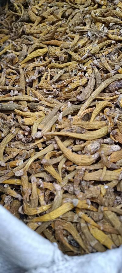 虎牙石斛  新鲜芽条  大量供应