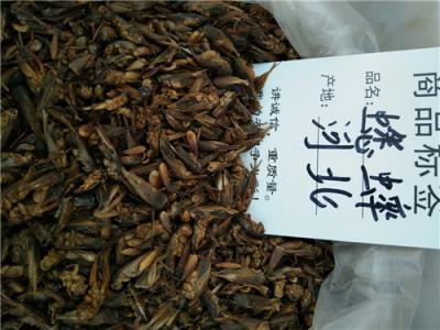 中药材蟋蟀哪里能买到多少钱一斤  只卖不收