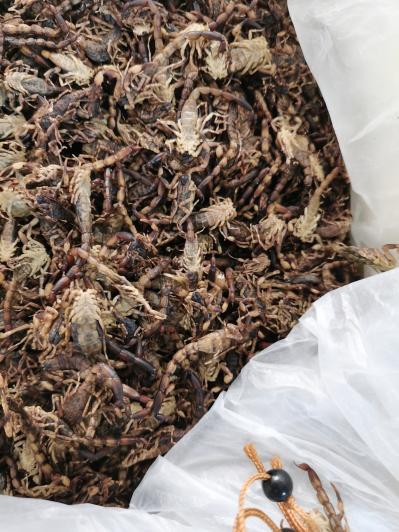 清水全蝎 蝎子价格全虫哪里能买到