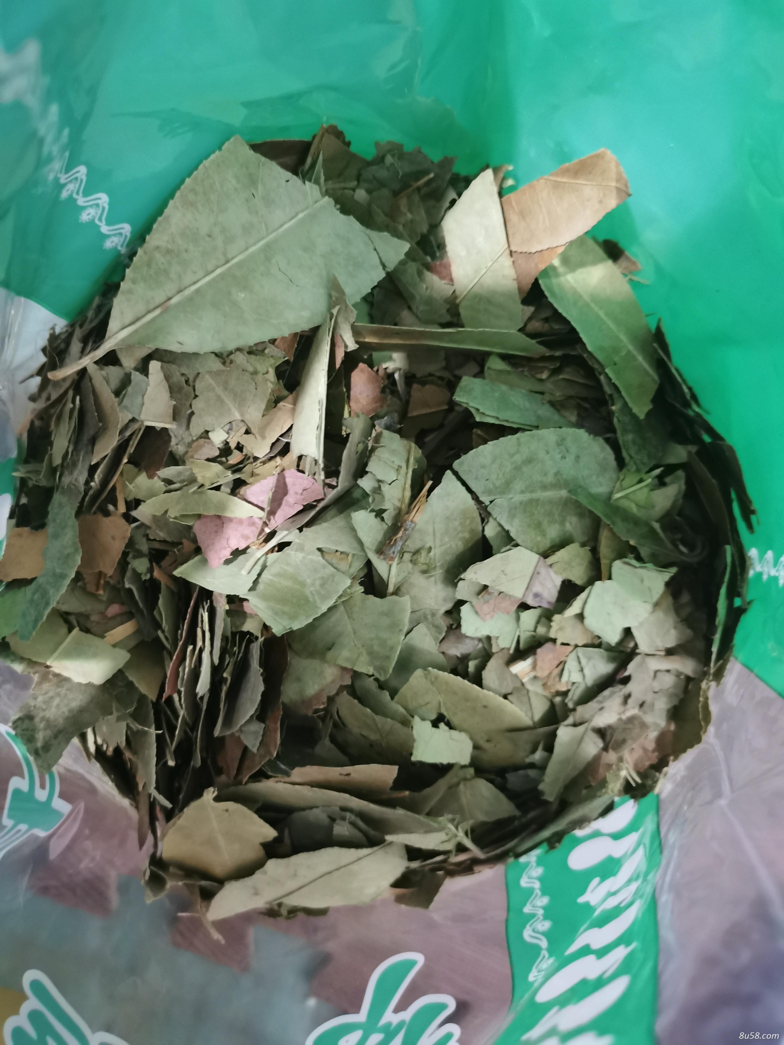 石楠叶哪里能买到石楠叶多少钱一斤
