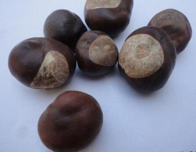 婆罗子是什么药材 冷背药材婆罗子哪里卖 婆罗子一公斤多少钱