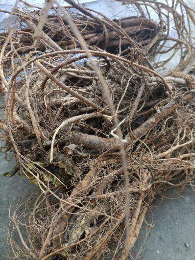 大量长期供应种植山豆根