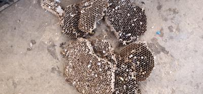 野山蜂蜂房,代价联系,品种齐全