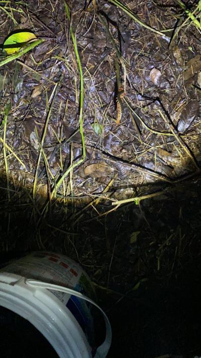 大量野生蜈蚣