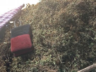 出售积雪草