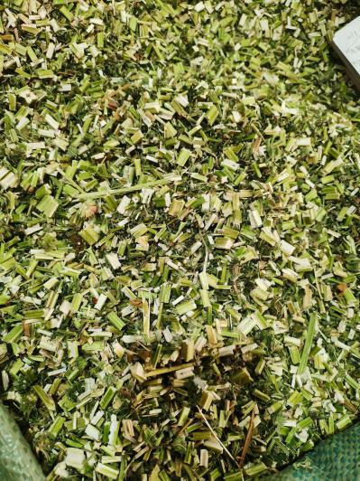 供应益母草批发零售益母草多少钱一斤