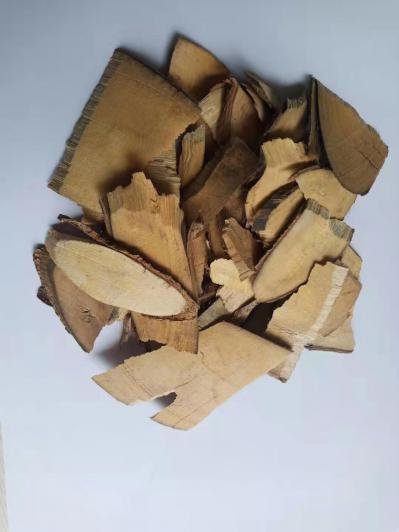 供应猫尾木批发零售猫尾木哪里能买到猫尾木多少钱一斤