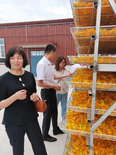 长期出售内蒙古地产金莲花和平贝母