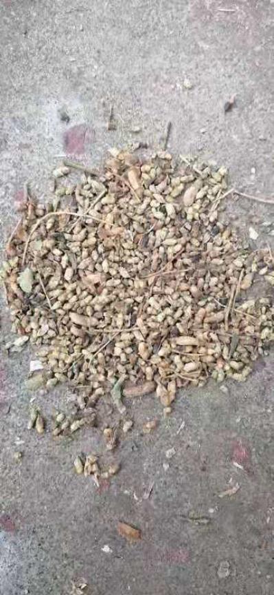 出售干槐米