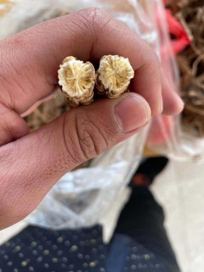 我是在黑龙江佳木斯种植防风的,大量出售,种植面积一百多亩,现货二十多吨